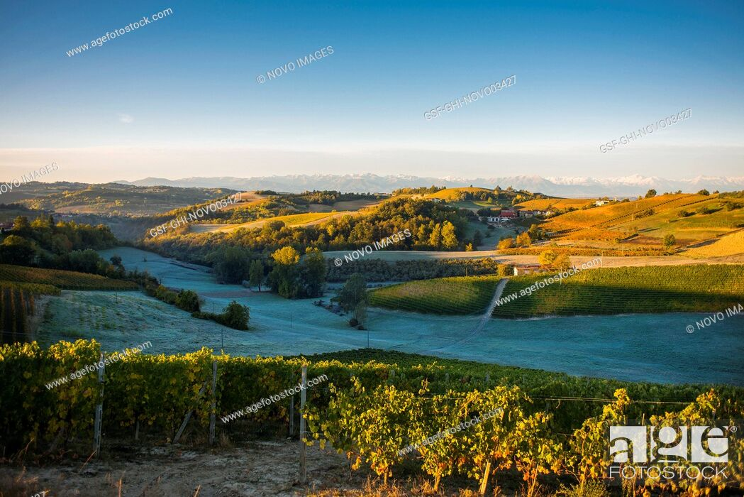 Imagen: Vineyards with Frosted Fields and Mountain Landscape at Sunrise, Dogliani, Piedmont, Italy.