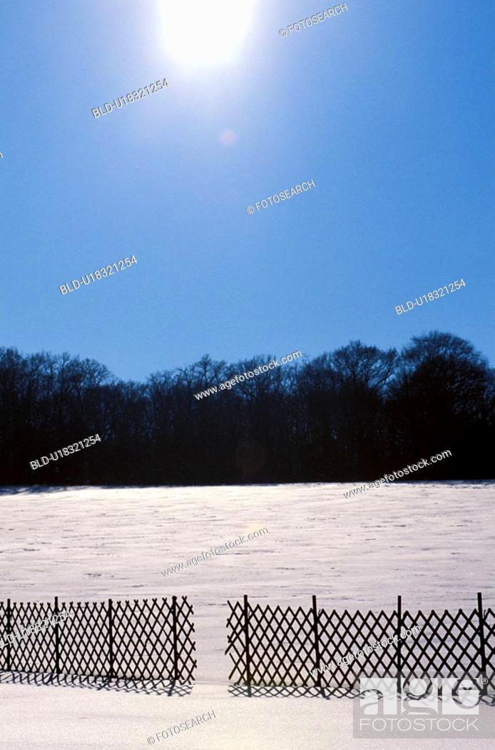 Stock Photo: weinviertel, austria, back light, calf, cold, coldly, fence.