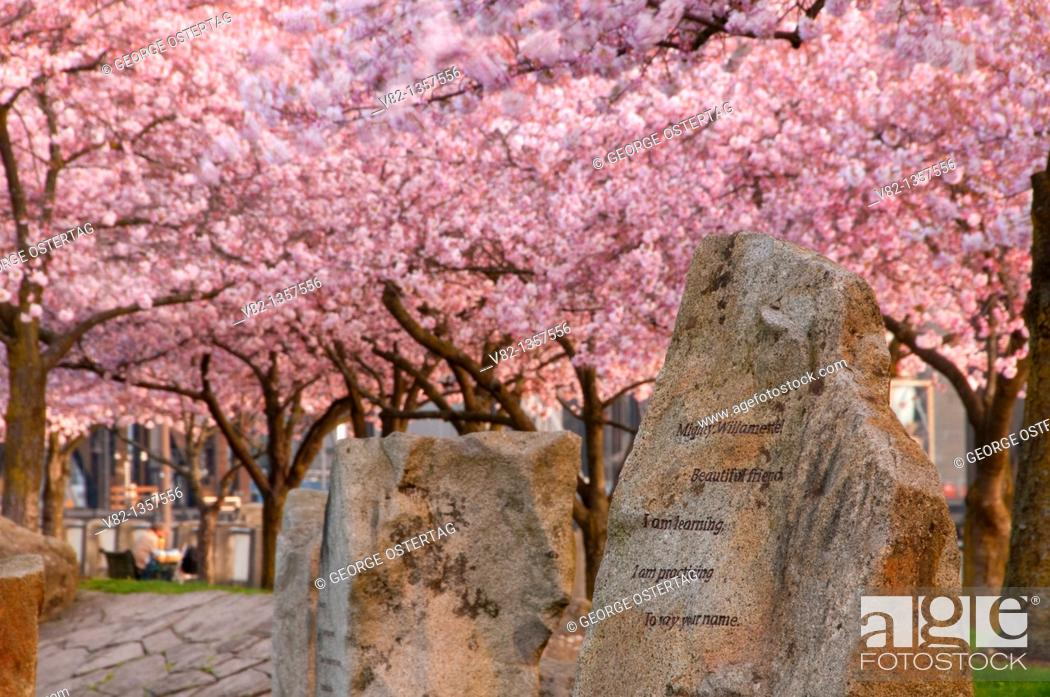Stock Photo: Carving with cherry bloom in Japanese-American Historical Plaza, Tom McCall Waterfront Park, Portland, OR.