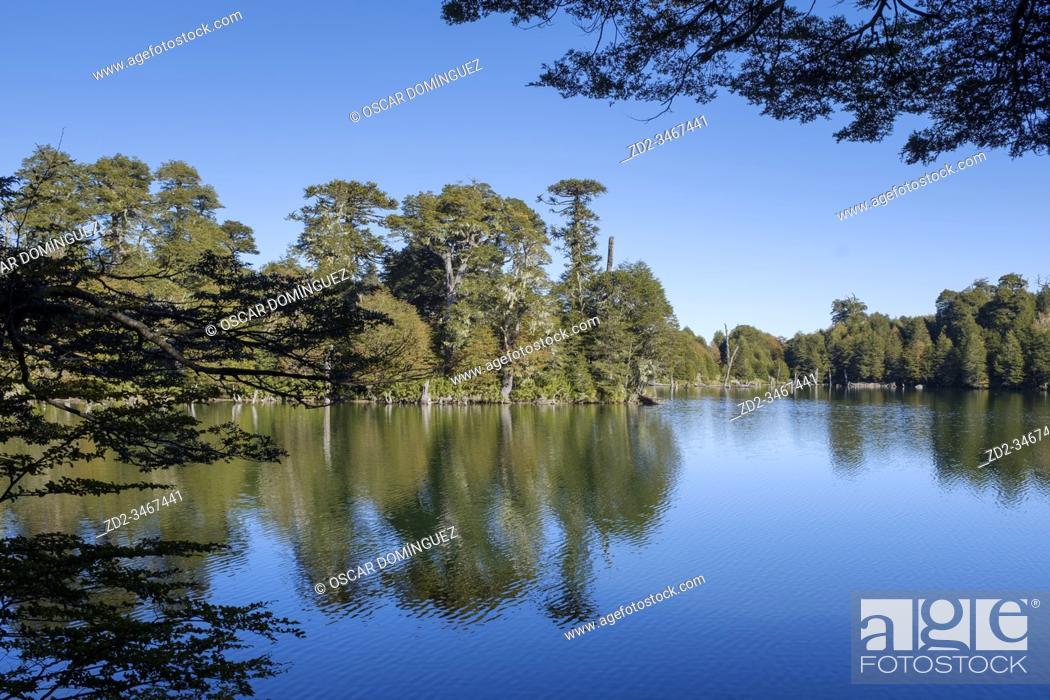 Stock Photo: Trees reflected in Captren lake. Conguillio National Park. La Araucania. Chile.