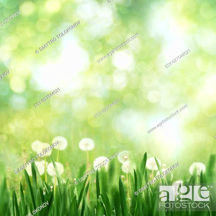 Stock Photo: Seasonal landscape with dandelion flowers and beauty spring foliage.