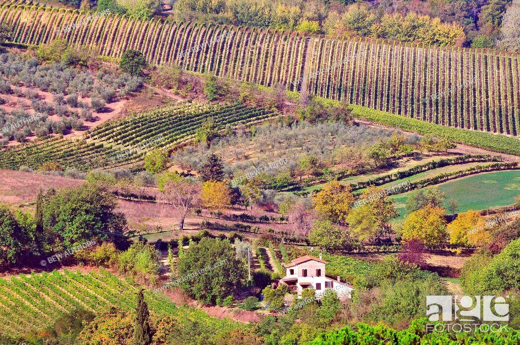 Stock Photo: Vineyards in Montepulciano, Tuscany, Italy.