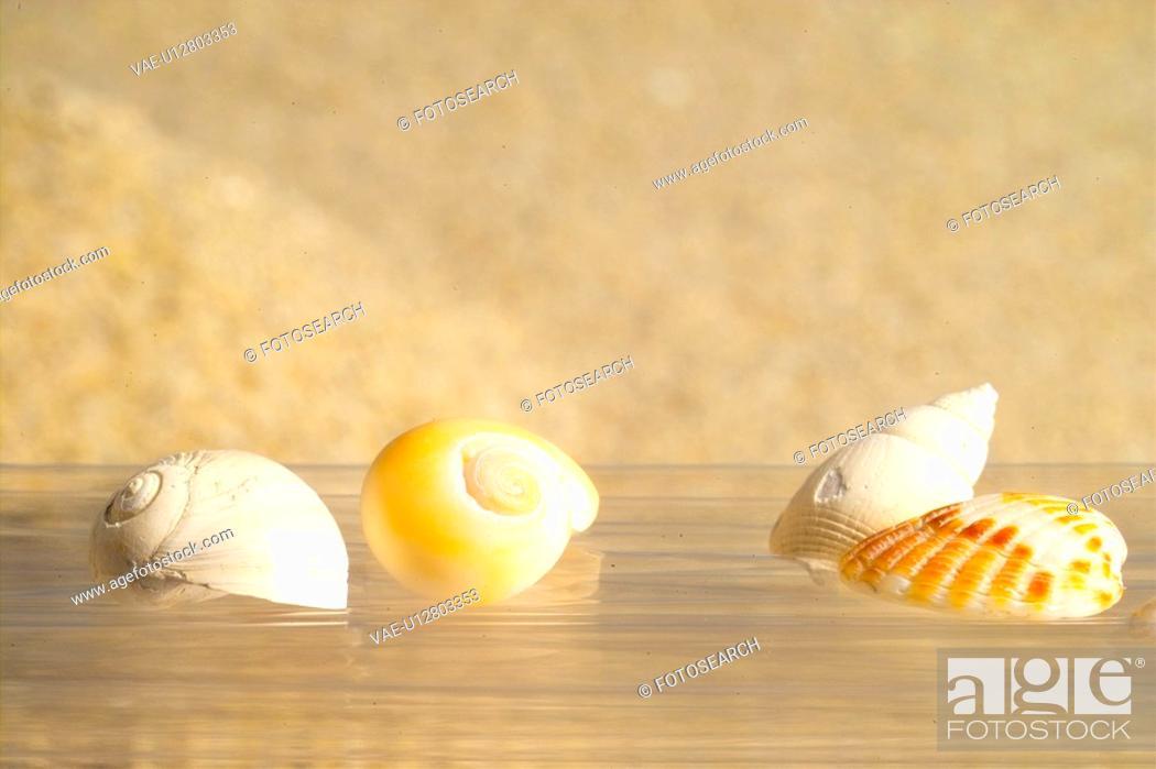 Photo de stock: mollucca, animal, mollusc, mollusks, mollusk, shell, conch.