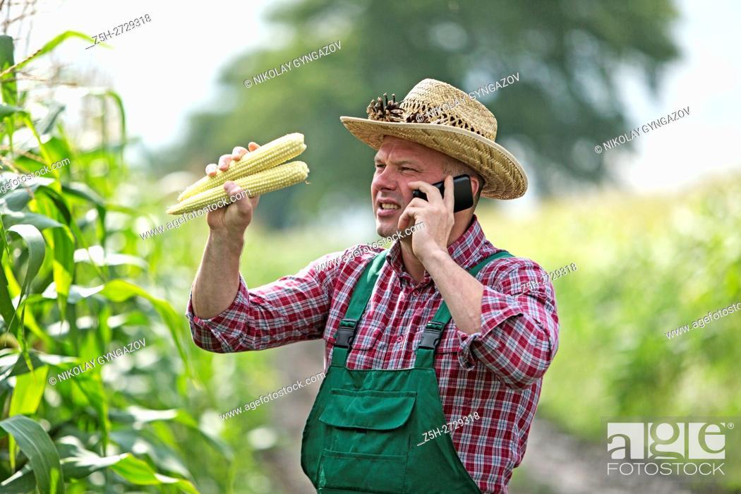 Stock Photo: Russia. Belgorod region. Male farmer in a corn field.