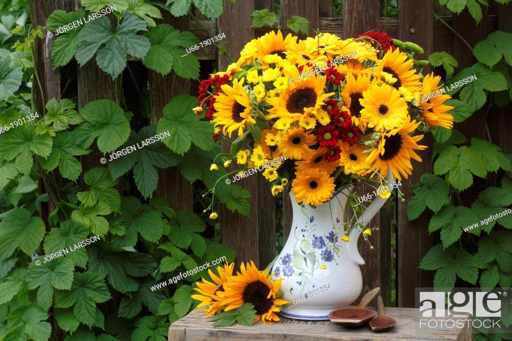 Stock Photo: Flowers, outdoor, Sweden.
