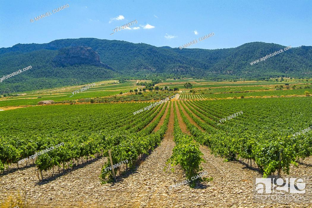Stock Photo: Vineyards. Bodega Casa de la Ermita. Denominación de Origen Jumilla. Comunidad autónoma de la Región de Murcia. Spain.