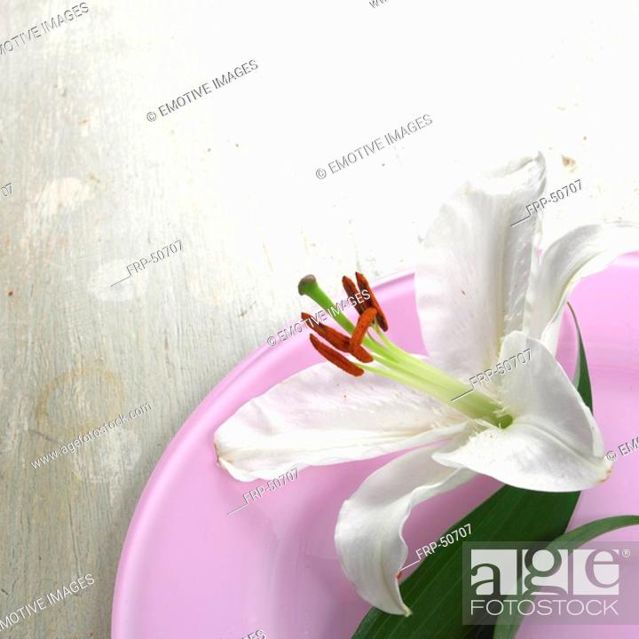 Stock Photo: Lily blossom on a light violet plate.
