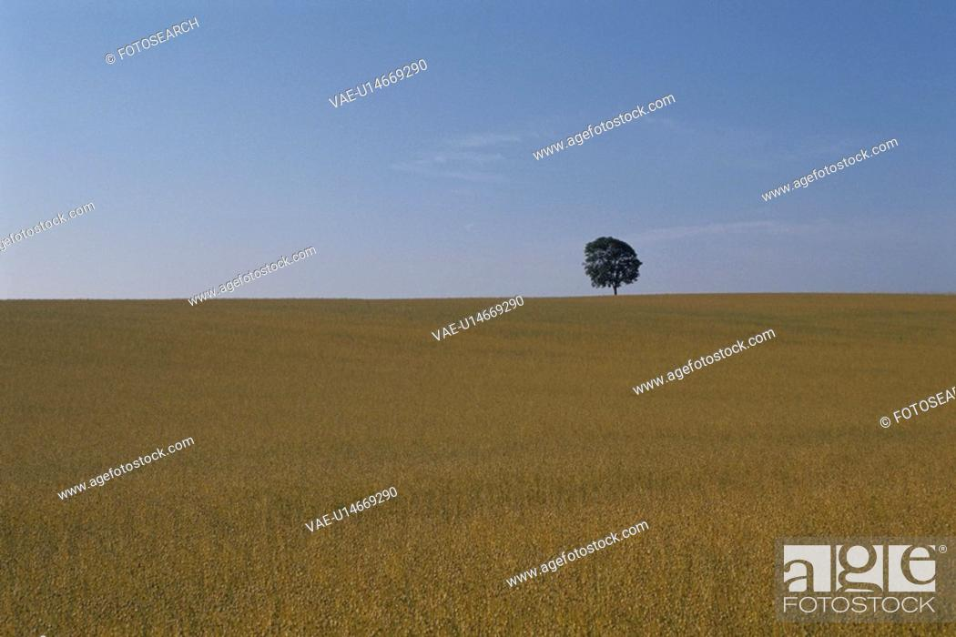 Stock Photo: A Meadow And A Tree.
