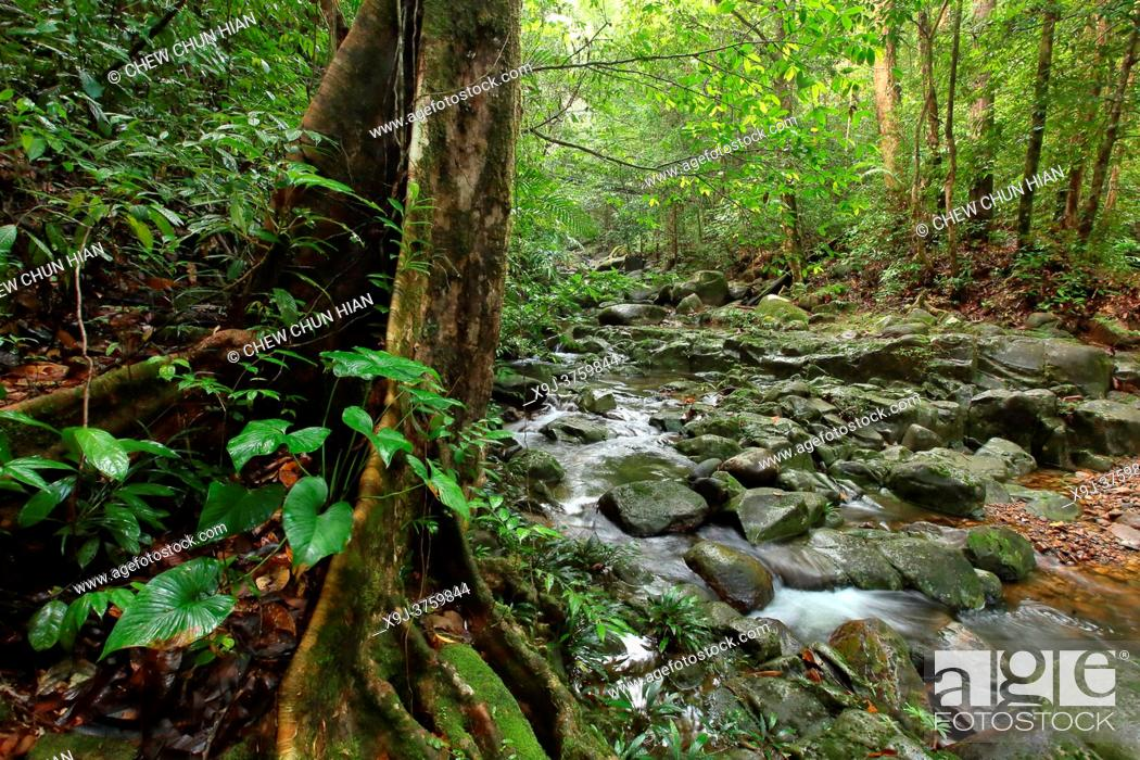 Stock Photo: Stream in Tropical rain forest lanscape, mount matang, kuching, sarawak, malaysia, borneo.