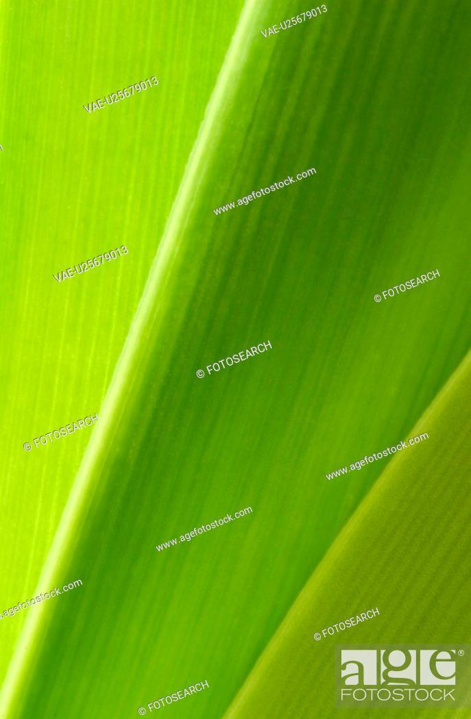 Stock Photo: plant, leaves, leaf, leafage, life, grow.