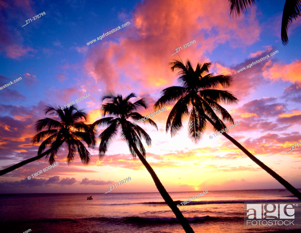 Stock Photo: Palms at sunset in King's Beach. West Coast, Barbados, West Indies.