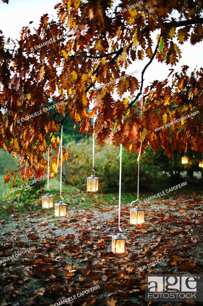 Stock Photo: Lighted lanterns hanging from the branches of an oak tree in autumn.