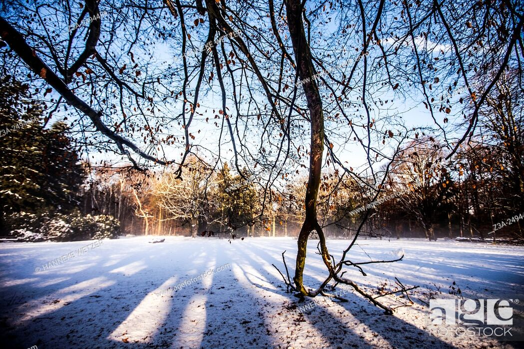 Stock Photo: Romantic snow landscape in the Netherlands, Europe.