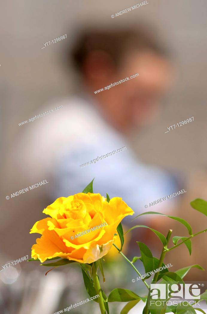 Stock Photo: Waitress serving at Munich restaurant with yellow flower in foreground, Germany.