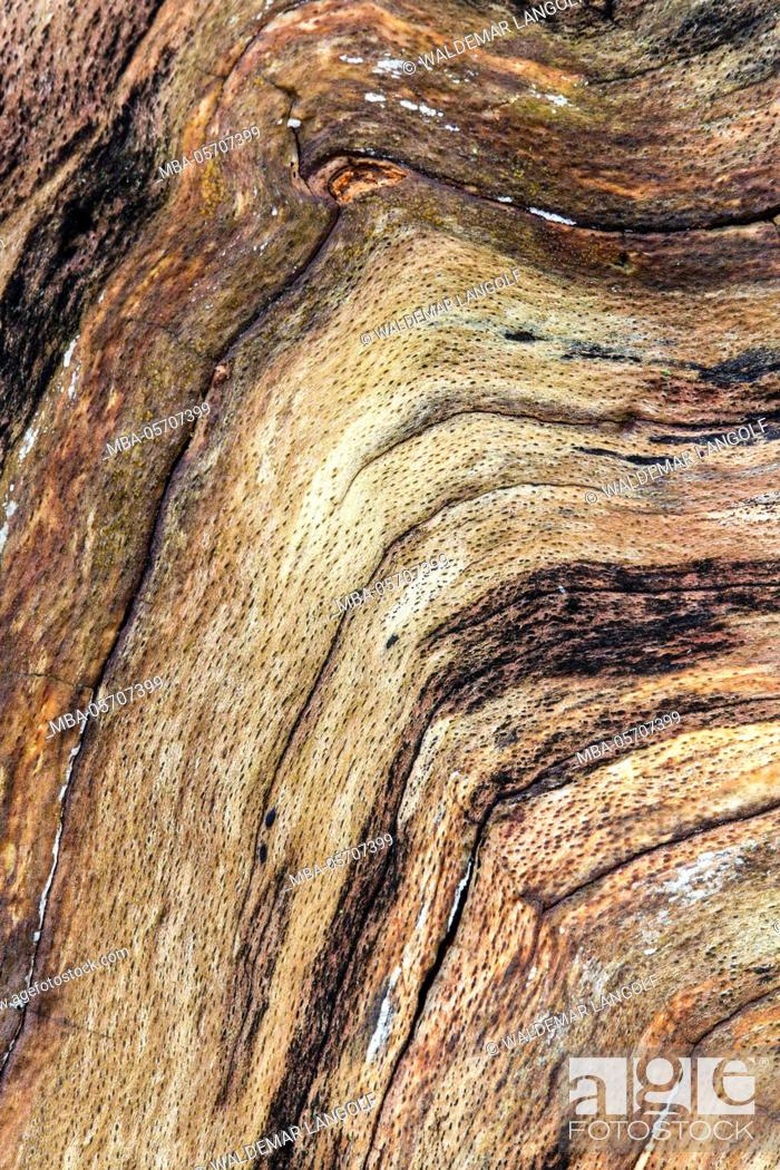 Stock Photo: artwork made of nature, Natural texture, wooden.