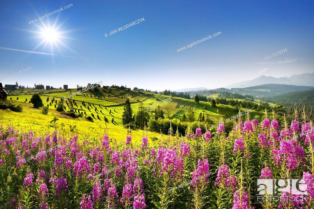 Stock Photo: Landscape near Gliczarow village, 10km from Zakopane (Tatra Mountains Region) and 14km from Lysa Polana (border with Slovakia).