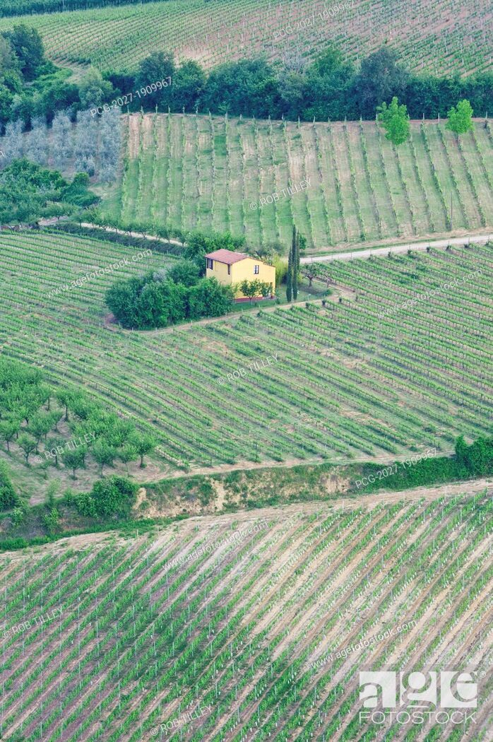 Stock Photo: Yellow House in a Vineyard.