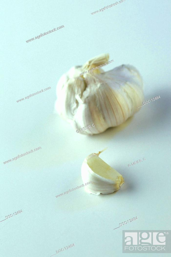 Stock Photo: Garlic bulb with clove of garlic - allii sativi bulbus - appertains to the kind of the lily plants - It contains ethereal oils vitamin A B1 C and nicotinic acid.