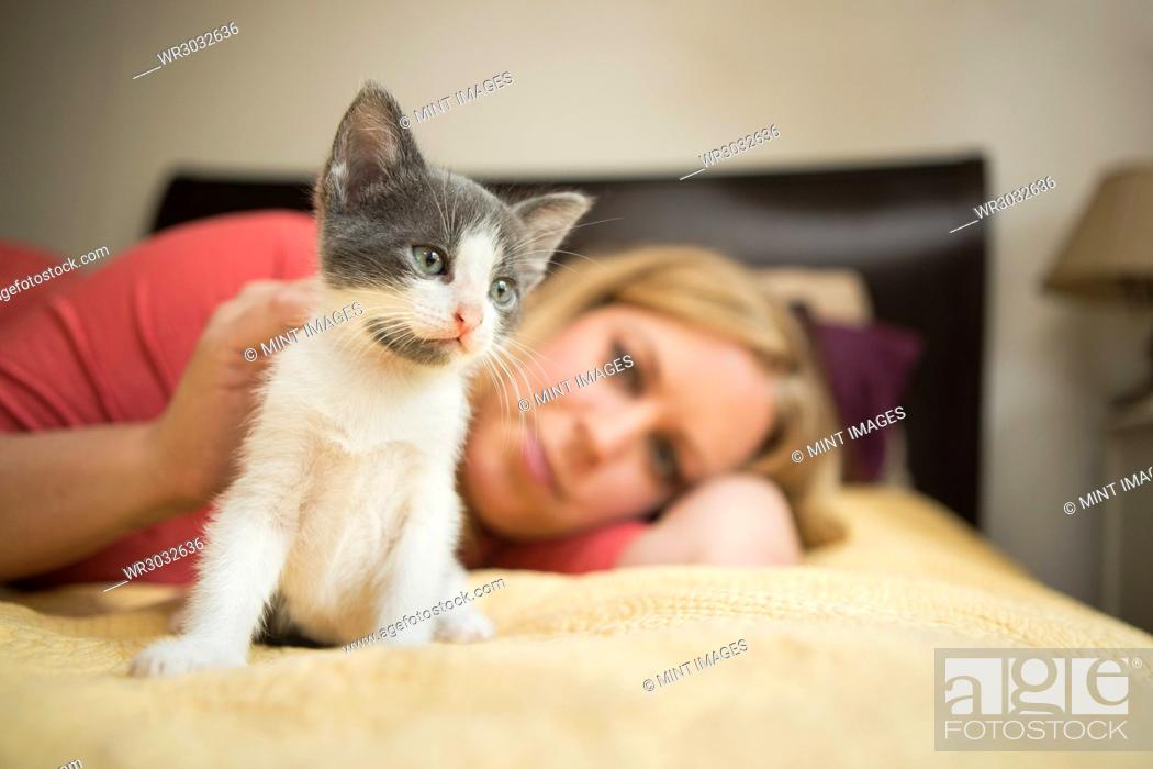 Stock Photo: A woman lying on a bed stroking a small grey and white kitten.