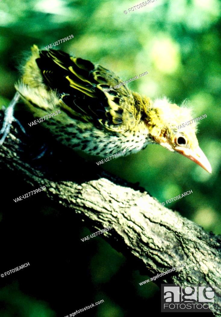 Stock Photo: branch, nature, young, chick, scene, wild animal, landscape.