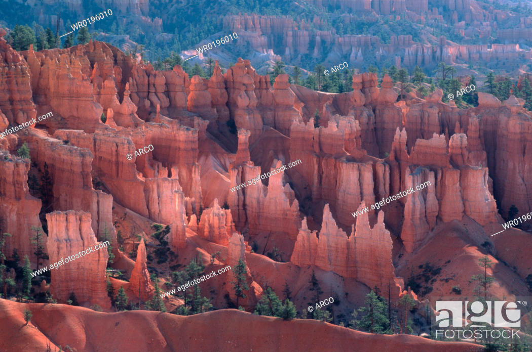 Stock Photo: Bryce, Canyon, Utah, USA.