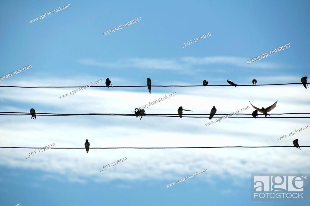 Stock Photo: Birds on wires.