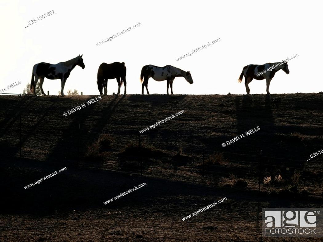 Stock Photo: Horses graze in Shandon, California, United States.