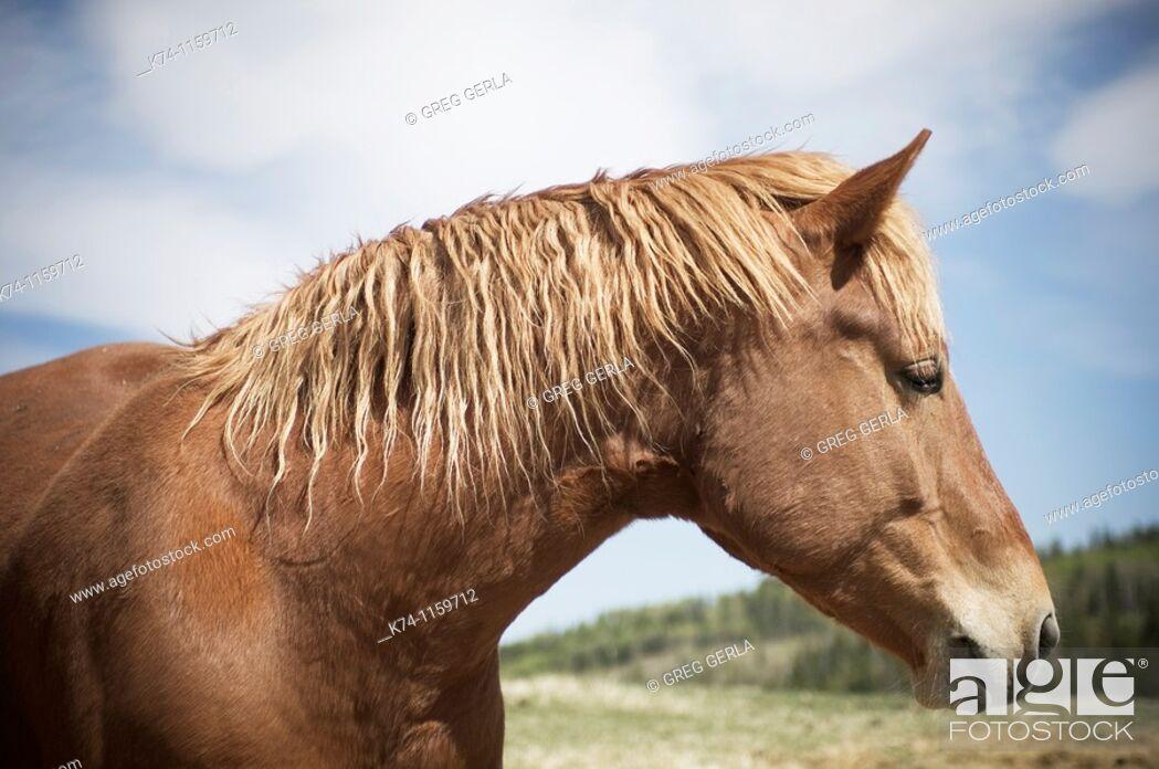 Stock Photo: Portrait of Horse.