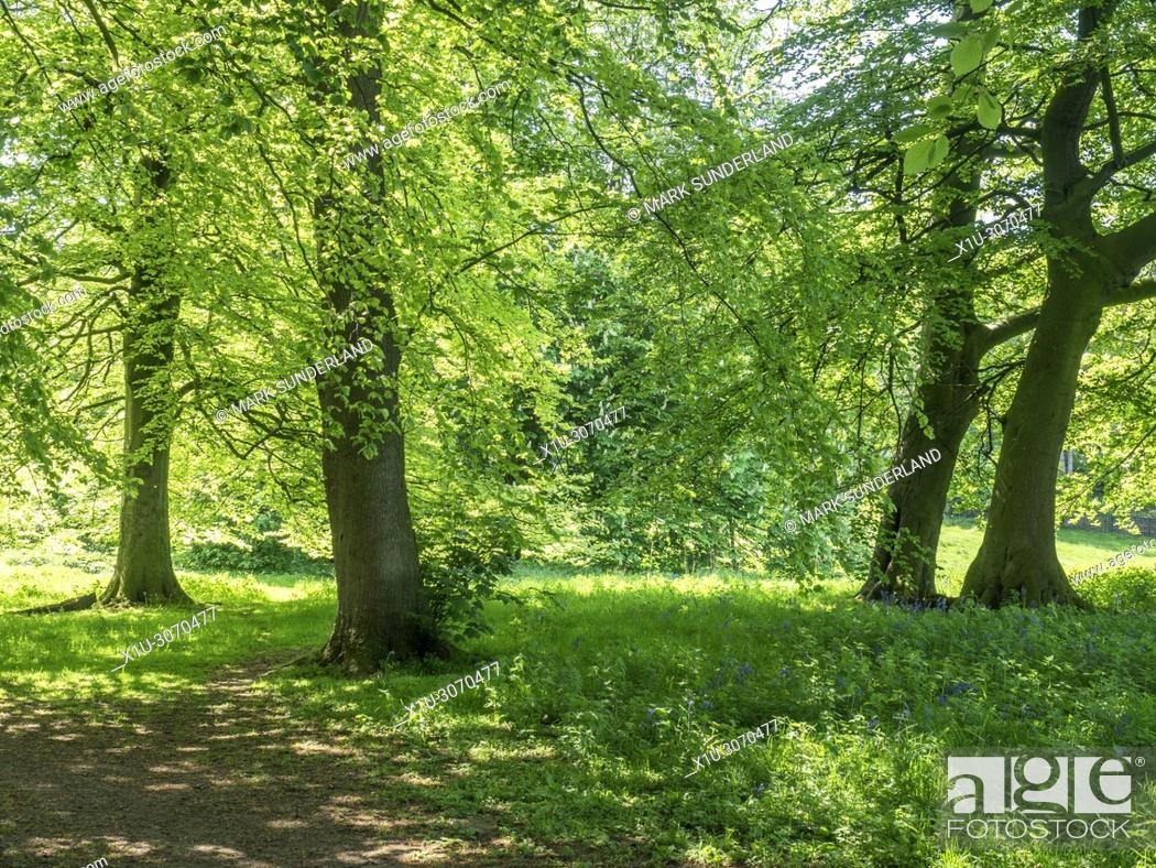 Stock Photo: Jacob Smith Park 30 acres of parkland bequeathed to Knaresborough by Winifred Jacob Smith MBE Knaresborough North Yorkshire England.