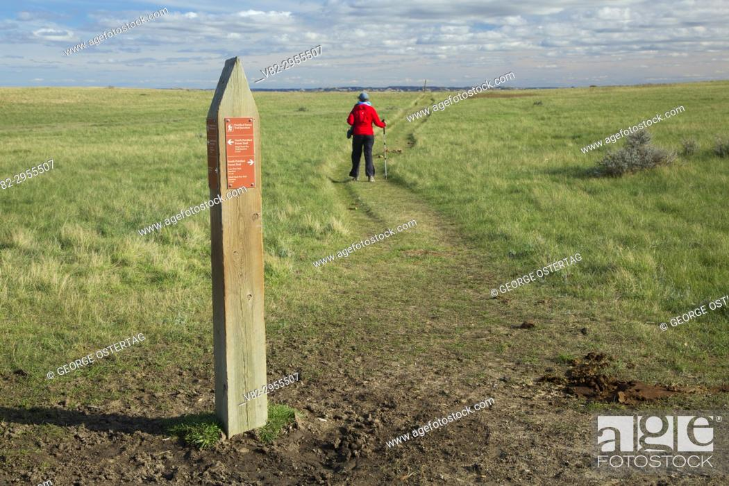 Stock Photo: Petrified Forest Trail junction, Theodore Roosevelt National Park-South Unit, North Dakota.