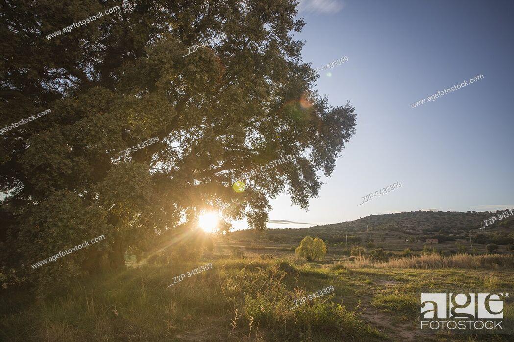 Stock Photo: Autumn landscape in Mora de Rubielos. Teruel, Aragon, Spain. Ancient holm oak.