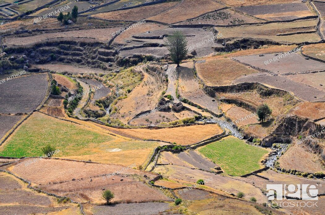 Imagen: Peru, Colca Valley, Terrace Cultivation.