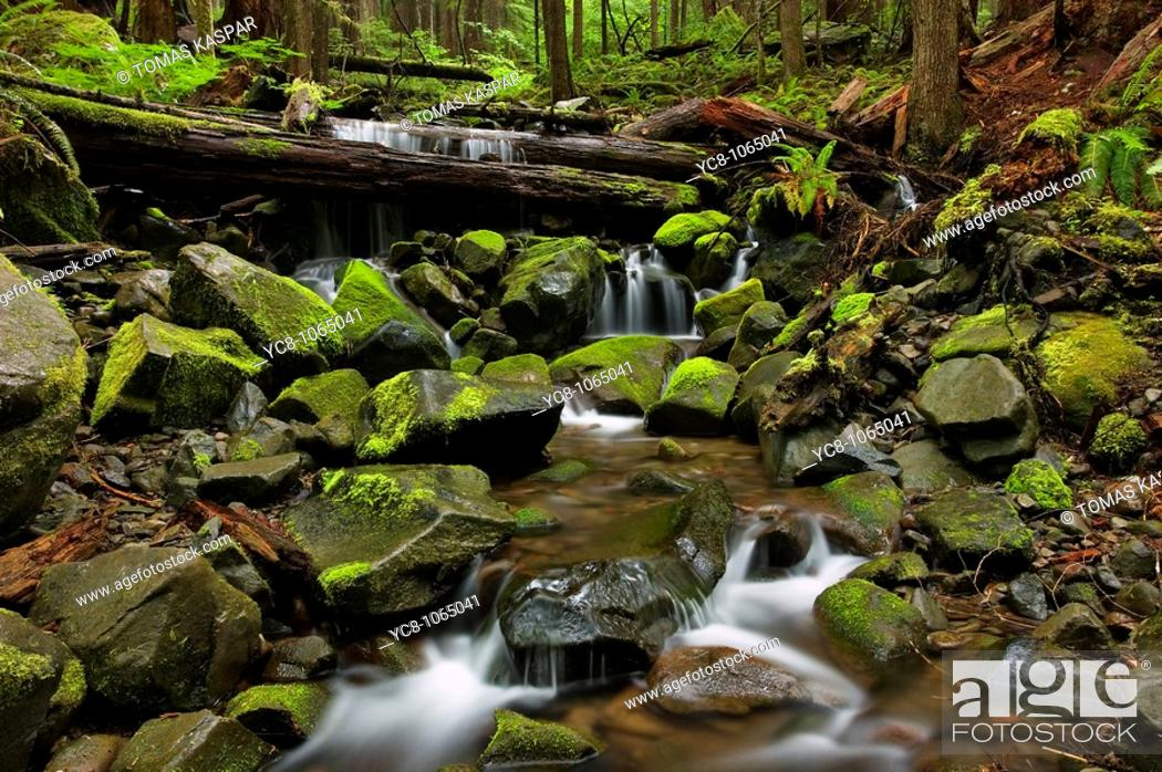 Stock Photo: Olympic national park - spring rainforest.