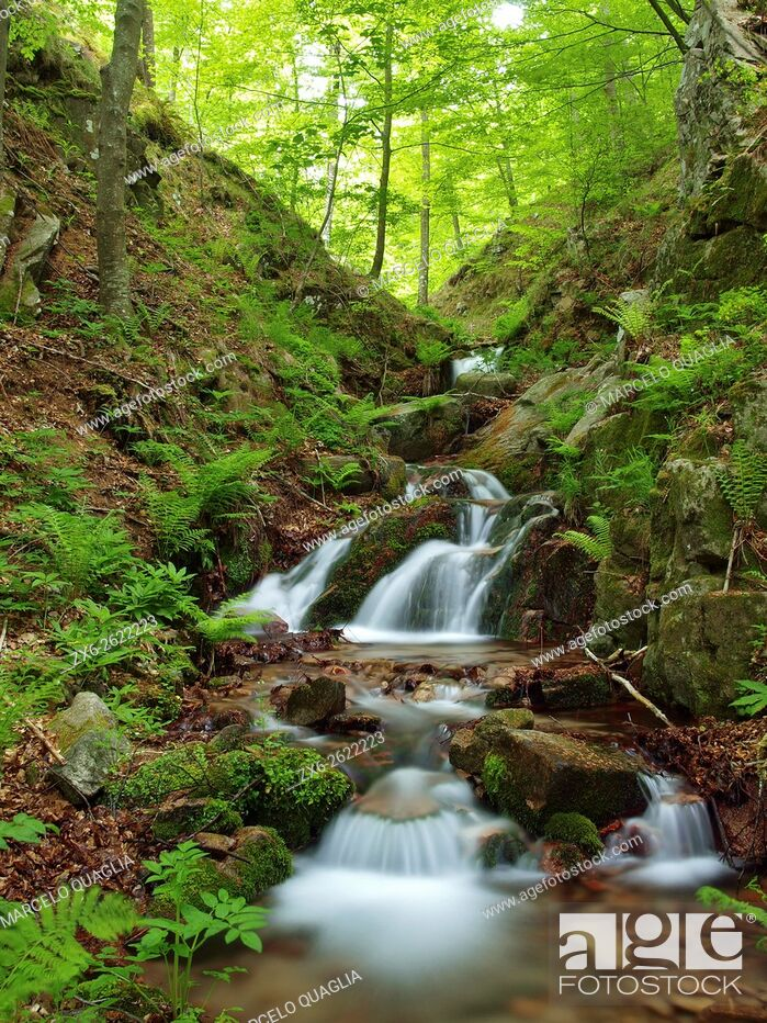 Stock Photo: Marianegre stream. Spring time at Montseny Natural Park. Barcelona province, Catalonia, Spain.