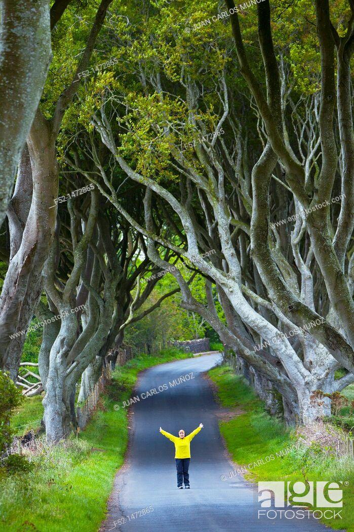 Stock Photo: The Dark Hedges  Ballymoney Countryside  Antrim County, Northern Ireland, Europe.