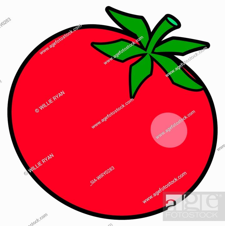 Imagen: Red tomato on white background.