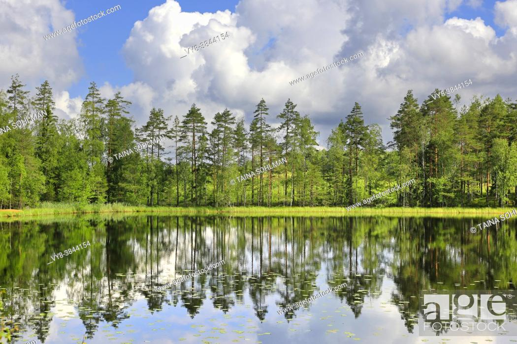 Stock Photo: Pine trees reflected on the calm surface of Lake Sorvasto on beautiful Midsummer Eve morning, with blue sky and fairweather clouds.