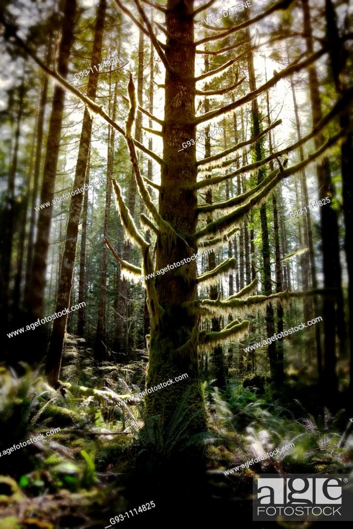 Stock Photo: backlit tree in forest.