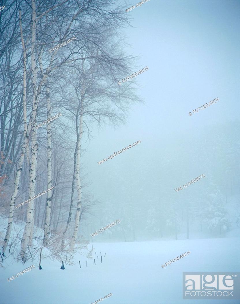Stock Photo: scene, nature, tree, snow, scenery, view, winter.