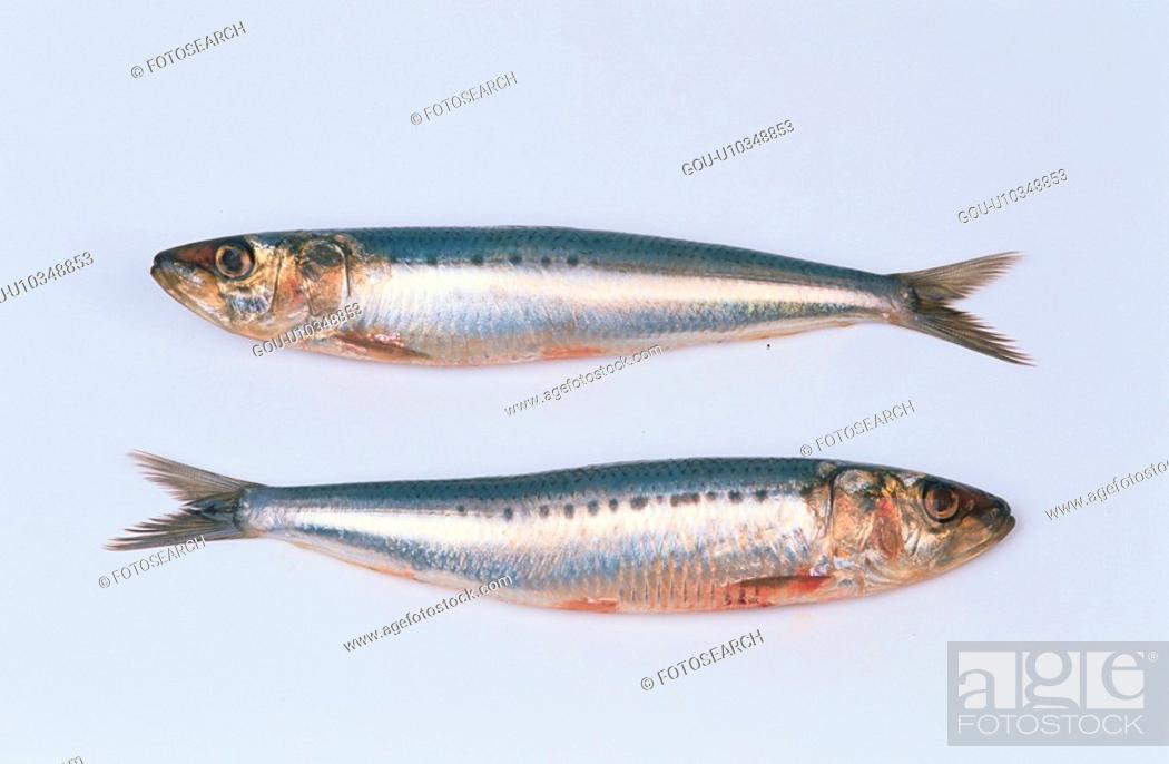 Stock Photo: Two Dead Sardines.