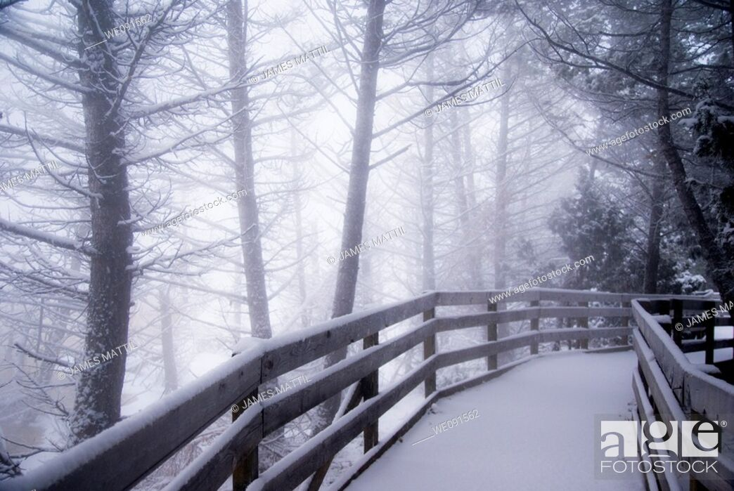 Stock Photo: Snow-covered wooden boardwalk leads into a mysterious winetr forest at Mammoth Hot Springs in Yellowstone Park.