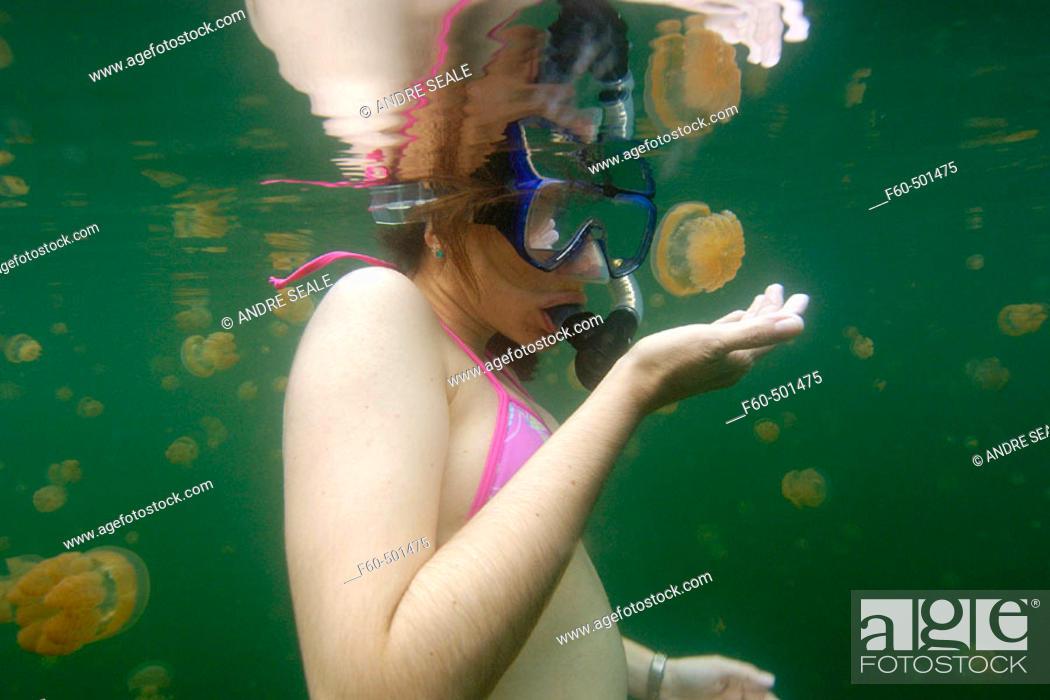 Stock Photo: Snorkeller closely observes the stingless jellyfish, Mastigias sp., Jellyfish lake, Palau, Micronesia.