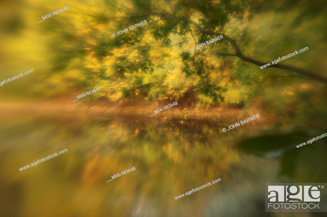 Stock Photo: dreamy scene of trees by water.