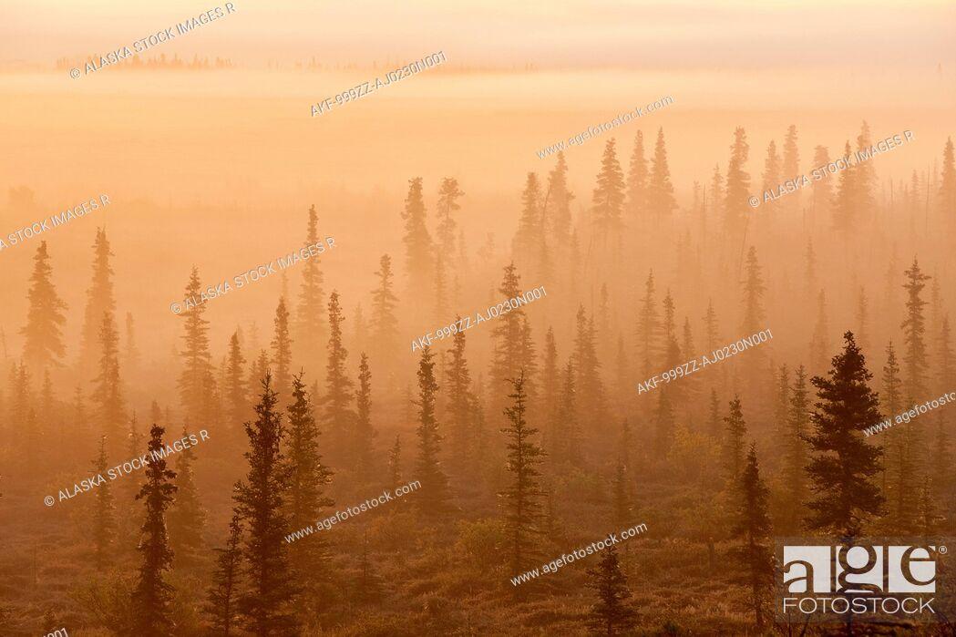 Stock Photo: Sunrise over a foggy forest, Katmai National Park and Preserve, Southwest Alaska, Autum.