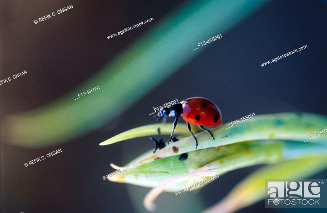 Stock Photo: Lucky bug.