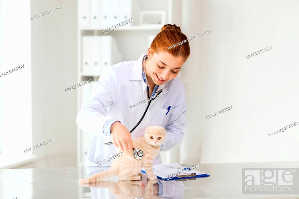 Stock Photo: medicine, pet, animals, health care and people concept - happy veterinarian doctor with stethoscope checking scottish fold kitten up at vet clinic.