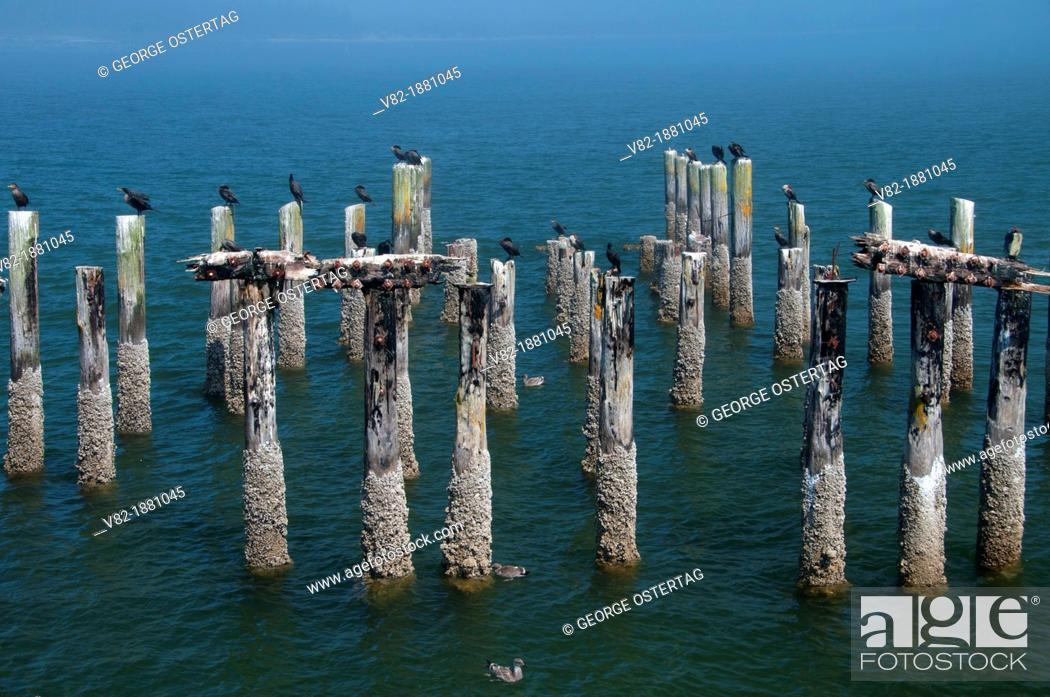 Stock Photo: Fishing pier pilings, Windy Cove County Park, Oregon.