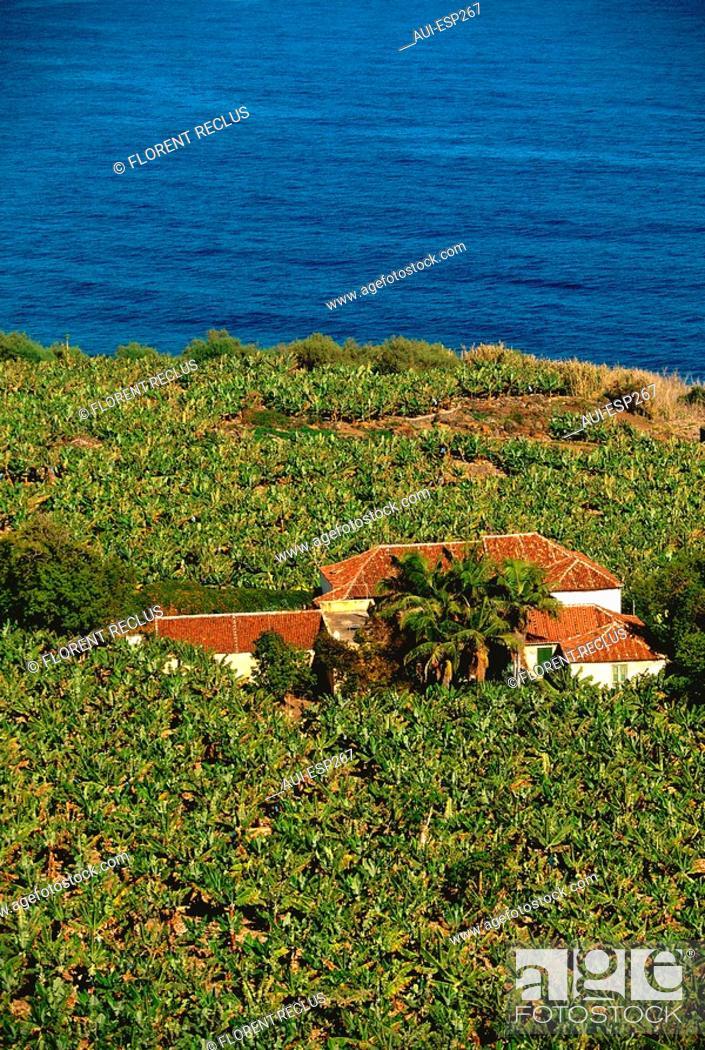 Stock Photo: Spain - Canary Islands - Tenerife - Mirador of San Pedro - Banana.