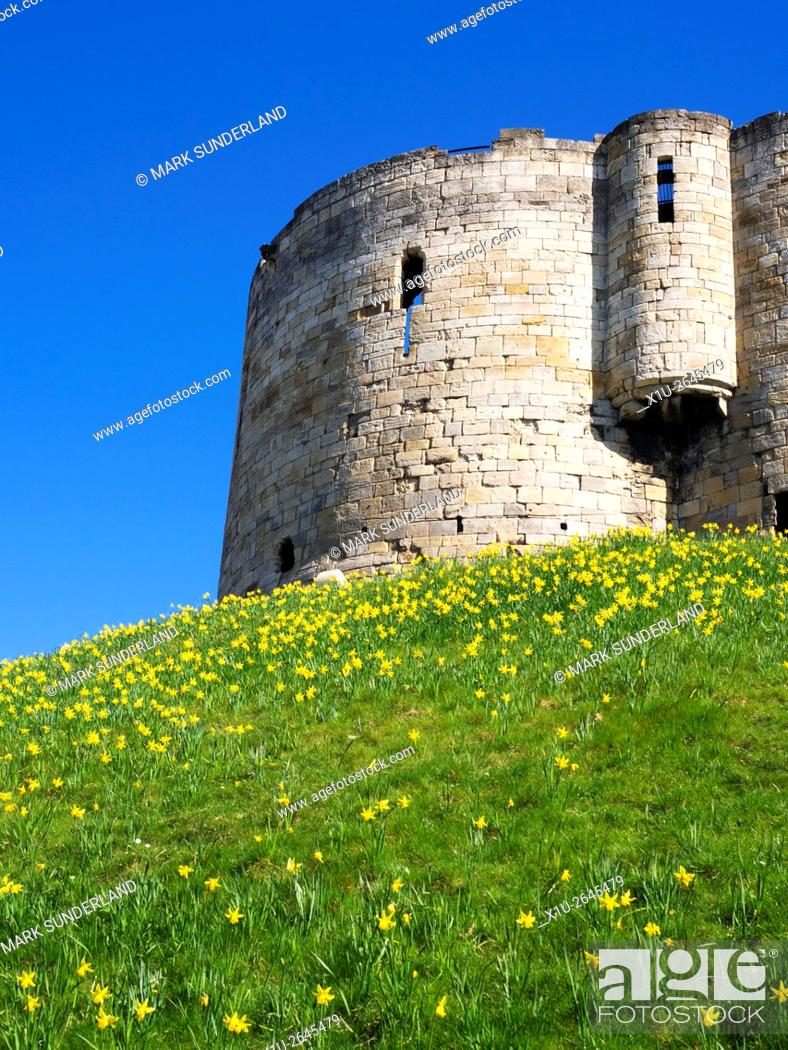 Imagen: Daffodils below Cliffords Tower the ruined keep of the medieval York Castle Yorkshire England.