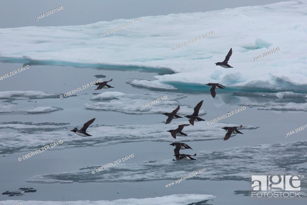 Stock Photo: pack ice, polar region, Spitsbergen,.